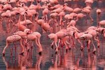Розовые волны здоровья: озеро Салинас