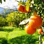 Испания: тайные уголки апельсинового рая