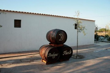 In vino veritas: почувствуйте себя виноделом