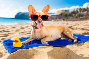 torrevieja-tur.com-пляжи-для-собак-в-Торревьеха