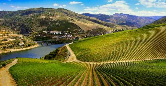Винодельни долины реки Дуэро