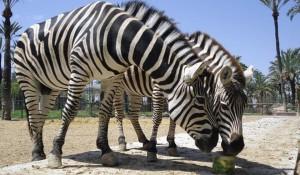 Зоопарк Рио Сафари Эльче -1