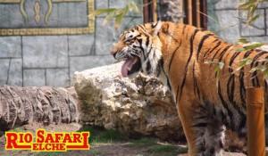 Зоопарк Рио Сафари Эльче -2
