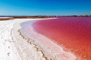 Розовое чудо Торревьехи - torrevieja-tur.com