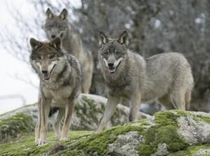 Где можно в Испании посмотреть на медведей, волков, оленей и ланей в естественной среде обитания