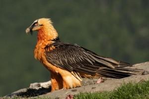 Где в Испании можно понаблюдать за редкими видами птиц в естественной среде их обитания