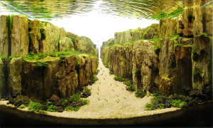 Необычный подводный мир в L'Oceanografic