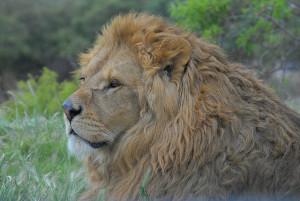 Safari Aitana- сафари-парк в провинции Аликанте